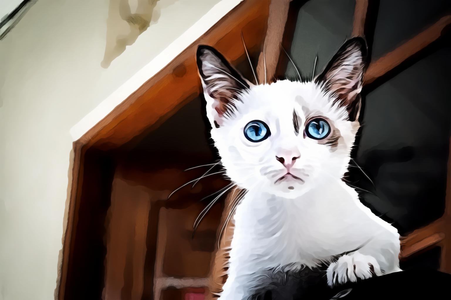 Close Up White Kitten