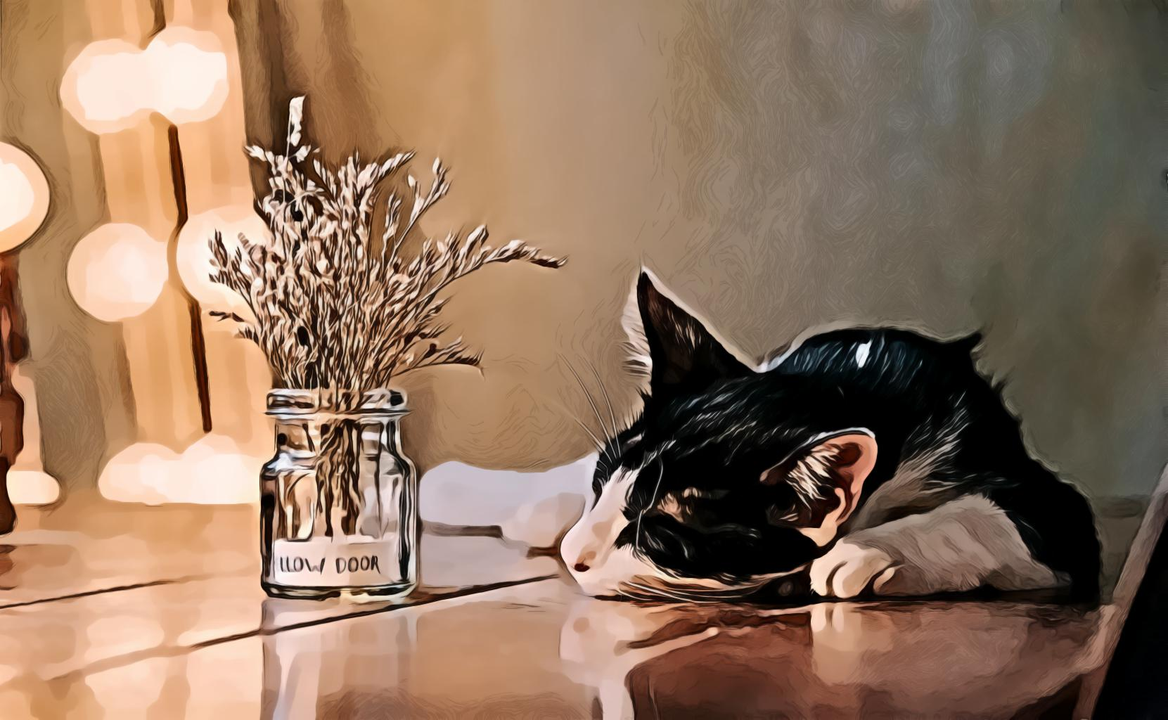 Laying Black And White Cat