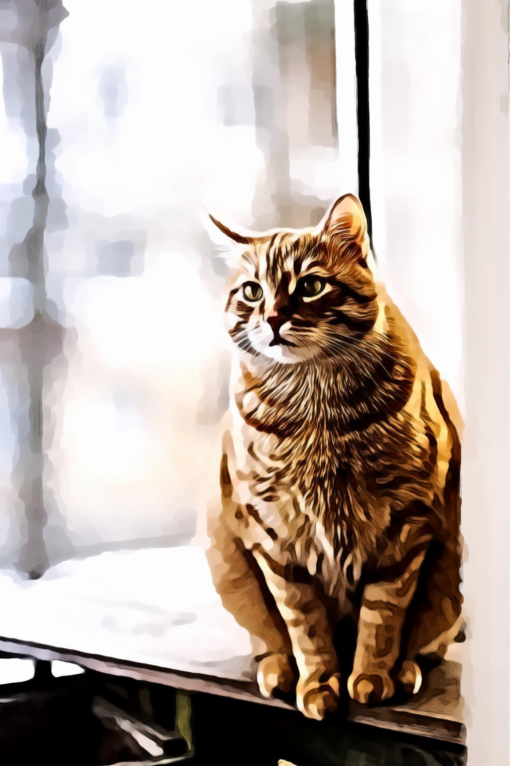 Selective Focus of Orange Tabby Cat