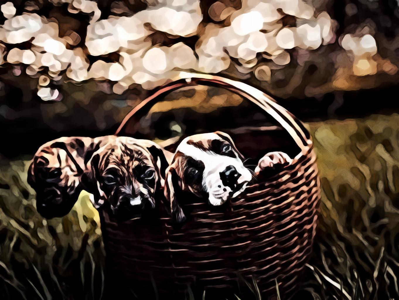 Three Brindle Puppies Inside Brown Woven Basket