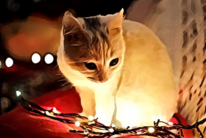 White Cat Besides Christmas Lights