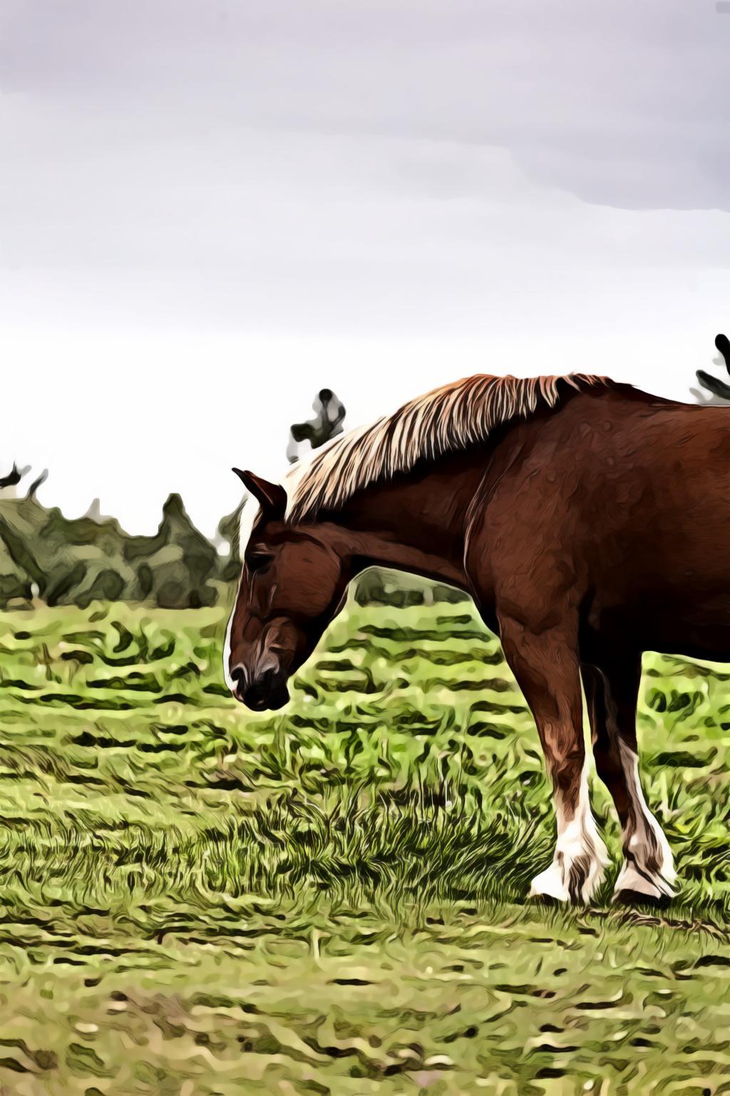 Horse on grass field