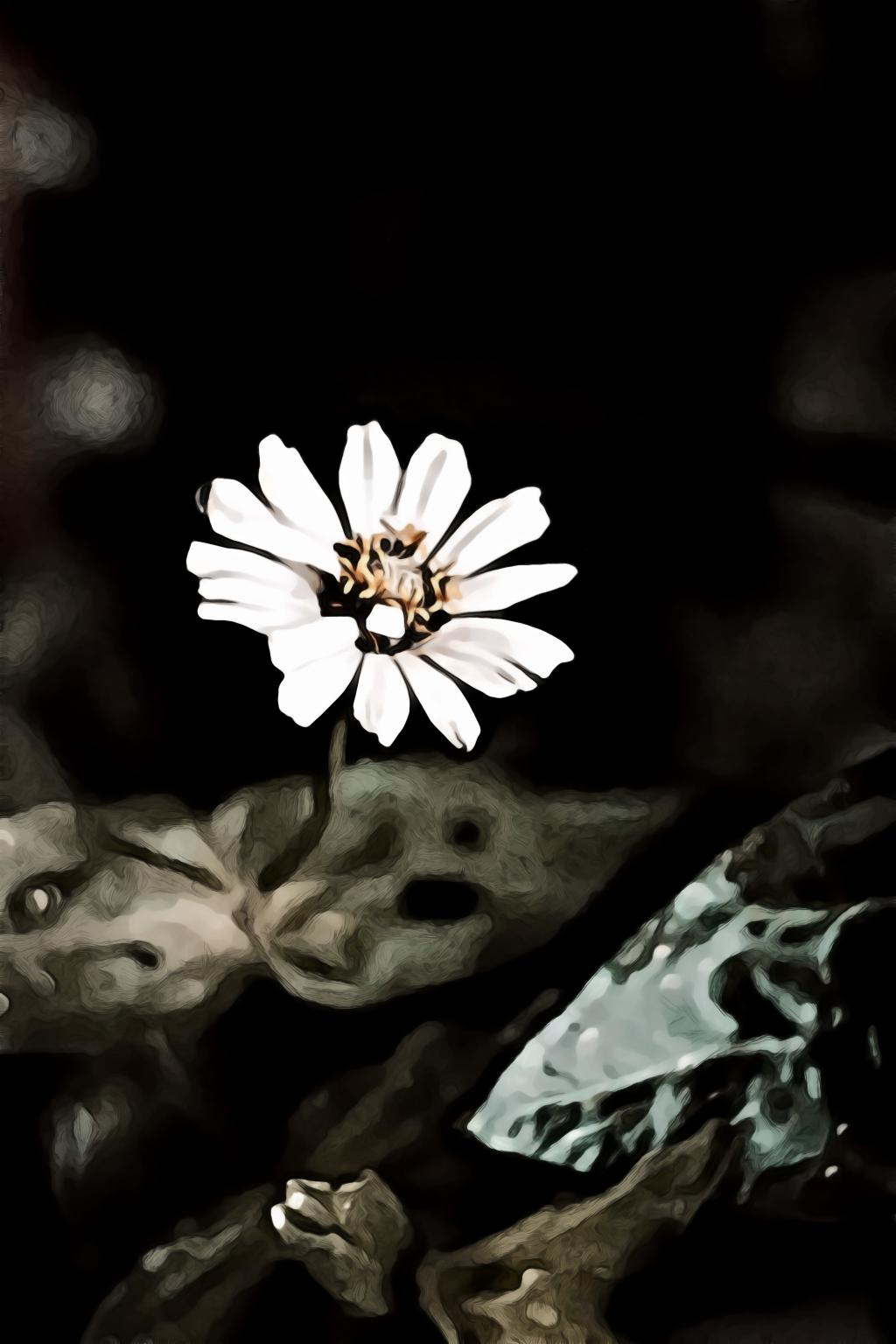White petaled flower in selective focus photography