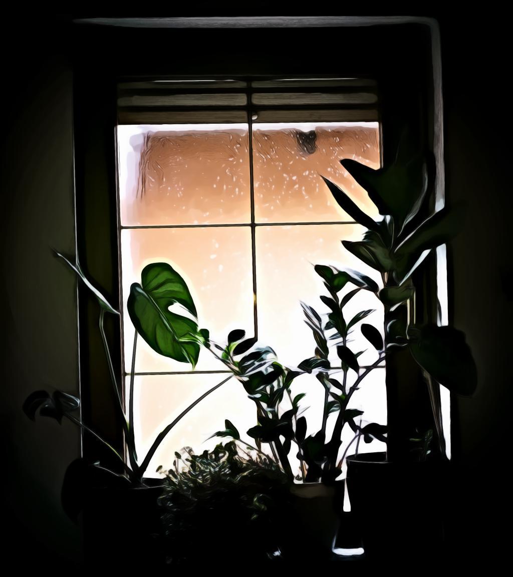 Plants near the window